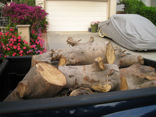 logs in my truck bed
