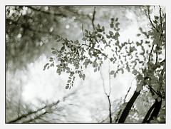first green (look-book) Tags: blackandwhite film analog trix d76 sw 4x5 analogue largeformat gf graflex speedgraphic lookbook jolo analogous aeroektar análogo