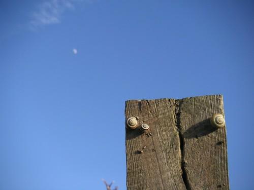 small-fencepost-moon-post-avebury5