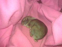 Baby bunny sleeping