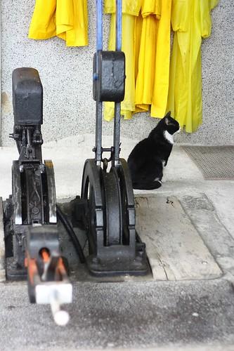 十分站有隻很有個性的貓