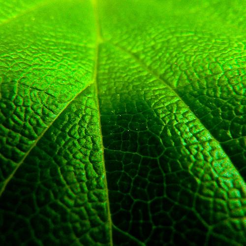 _green_brain