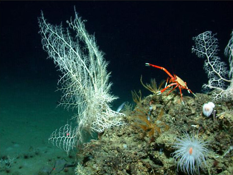 Basket stars, crinoids, anemone, and crab