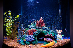fish aquarium tank hlkljgk 365grateful