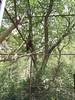 S4026200 (pappgabor) Tags: zoo veszprém 2007
