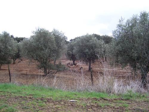 Portugal_090103_140010_MoJo