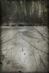 stopping by woods on a snowy evening (-justk-) Tags: winter copyright lake snow cold ice nature forest woods go footsteps frozenlake promises imagesforthelittelprince allmyimagesarecopyrighted©allrightsreserveddonotusecopyandeditmyimageswithoutmypermission