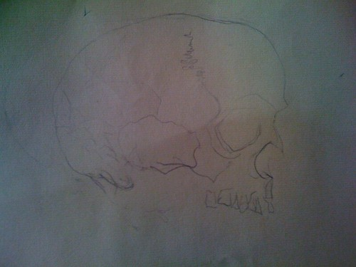 images of nature drawing. Nature Drawing 1/31/2009 - human skull, modified blind contour