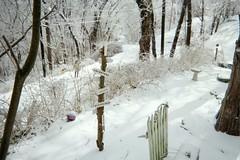 The lower part of our yard...Hillside Avenue below (junebug_1944) Tags: icestorm eurekaspringsar january2009