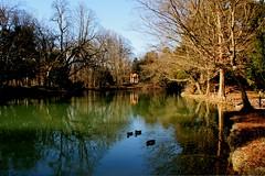 Il laghetto della Villa Reale