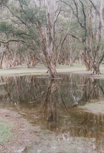 Centennial Park after rain