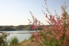 (Reza-ir) Tags: flower nature water iran dam mashhad sluice khorasan