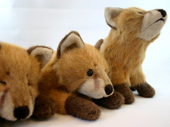 Sachalin red fox