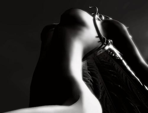 Black & White .... Surrender