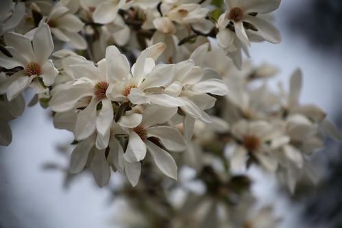 Blütenpracht,Köln