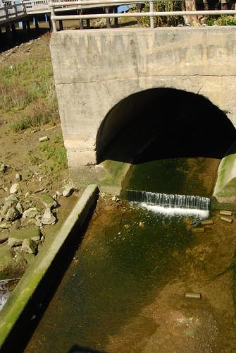 Sausal creek reemerges!