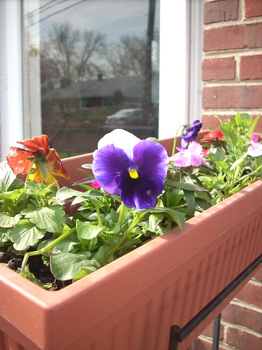 railing flowers