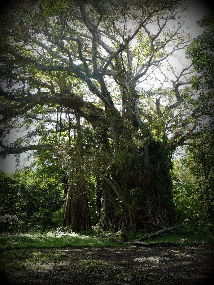 Vanuatu : Ile de Tanna #60 : bagnian