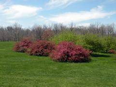 Arboretum View (leafytreeful) Tags: flowers blue trees flower green landscape three purple lexington kentucky arboretum lexingtonky universityofkentucky ukarboretum