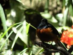 bird zoo sandiego bokeh sandiegozoo