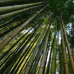 Ninfa (LT) - Bamboo (Andrea Biagianti) Tags: rome roma nikon bamboo latina 1224 lazio ninfa d300 tokina1224f4