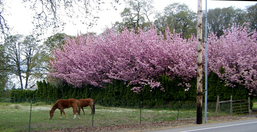 All the Pretty Horses (and Trees)