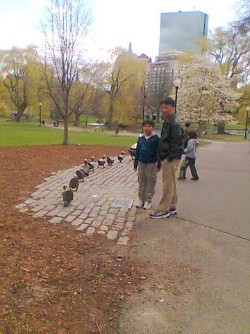 make way for quacklings