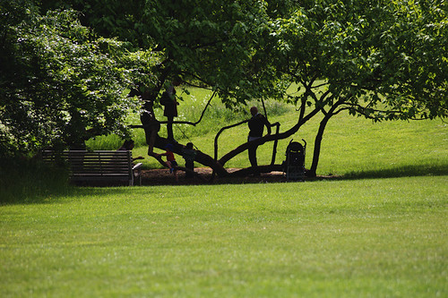 Kew-Gardens---tree-life
