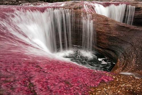 El río mas hermoso de el mundo (Colombia Caño Cristales)