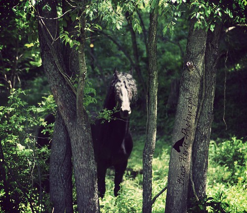 Stallion in the woods