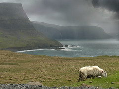 Rapid change of weather on Skye (Bn) Tags: scotland isleofskye jura atlanticocean topf200 darkclouds scottishhighlands 200faves abigfave blackfaces moonenbay watersteinhead scottishblackfacesheep sognidreams rainrainandrain thelittleminch northwestofskye steepcoastlineofskye uppermilovaigwaterfall 295meterhighcoastline peninsulasandbays rapidchangeofweather