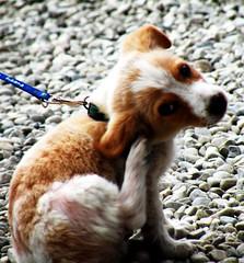Little dog (M.A.R.I.A.N.O) Tags: dog animal cane puppy flickr piccolo animale cucciolo flickrlovers coolpixp80 marianomercelli
