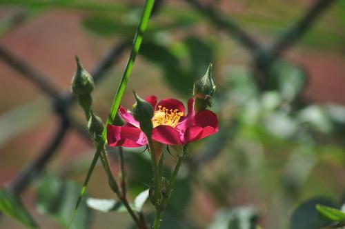 Flowers of June