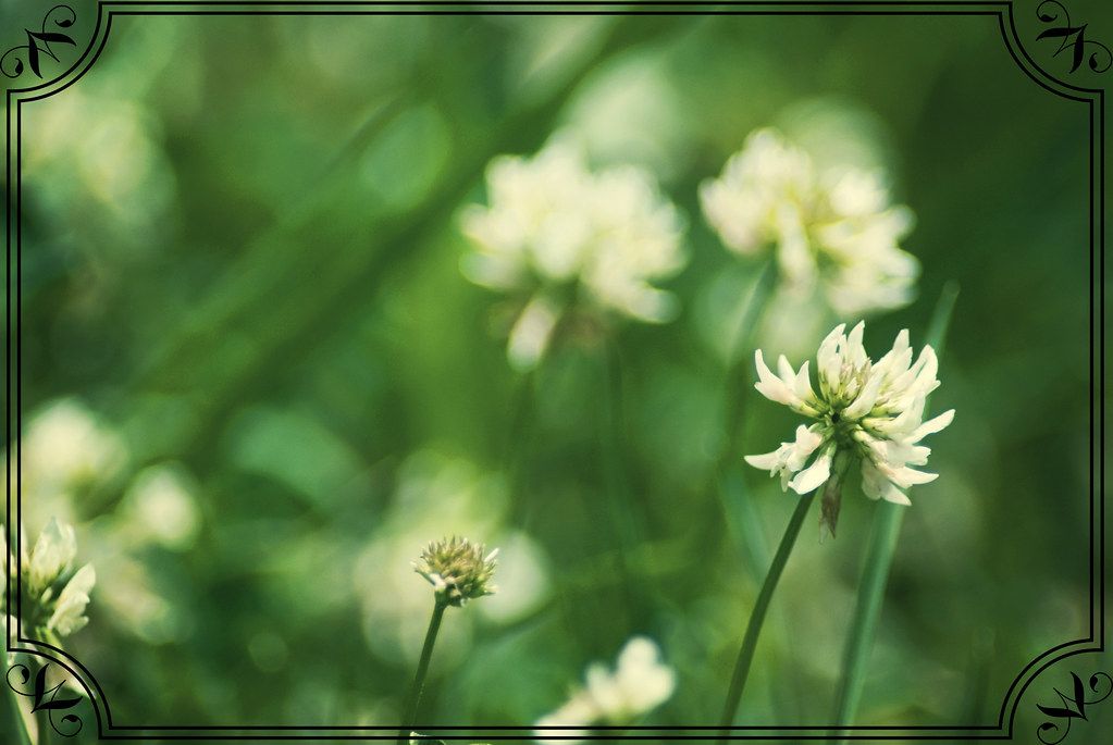 clover retro_edited-1