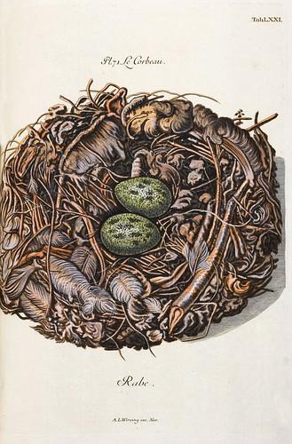 012-Nido del Cuervo-Colección de nidos de aves 1772