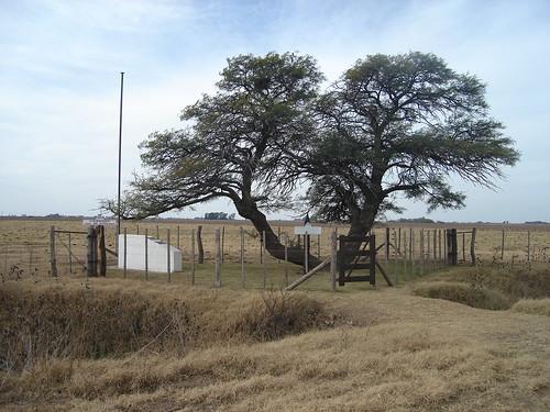 fotos de mi pueblo tres algarrobos (prov de bs as argentina)