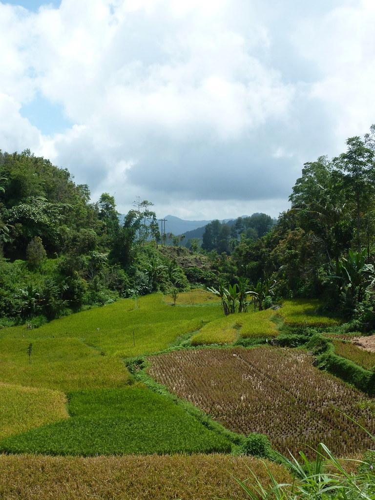 Sumatra-Bukittinggi (157)