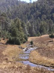 Río con bosque - Sierra Tarahumara; entre Basaseachic & San Juanito, Chihuahua, Mexico