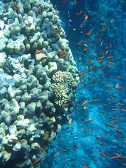 137_3730 (LarsVerket) Tags: egypt snorkling fisk undervannsfoto