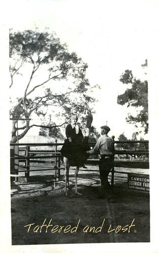 Cawston_ostrich_farm_tatteredandlost.jpg