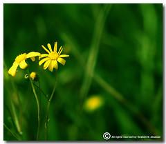 Green Nature (ibrahem N. ALNassar) Tags: green nature 30 canon eos d n l kuwait usm f56 ef 30d 400mm    alnassar   ibrahem