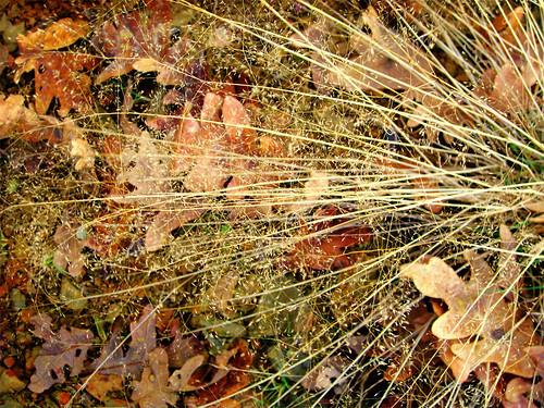 Caras de hojas