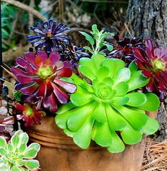 DSC_0431 (fotos by greg) Tags: flowers plants nikon colorful bright 28 1424 d700