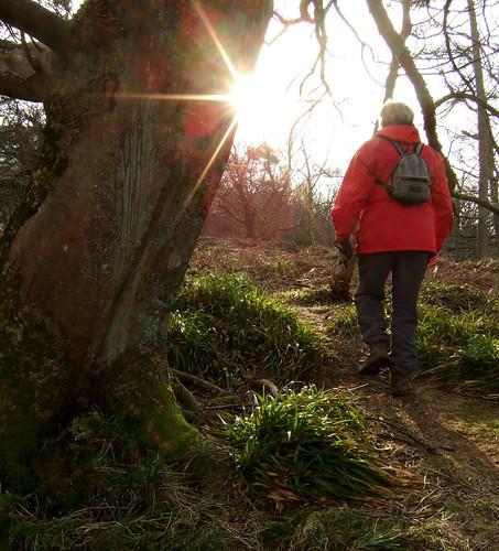Goldenberry woodland 04Feb09