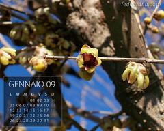 Calendari (fedegrafo) Tags: 2009 calendari