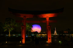 Disney - Japan Torii Gate at Night