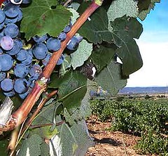 Entre viñas y tragos, una nueva propuesta de enoturismo