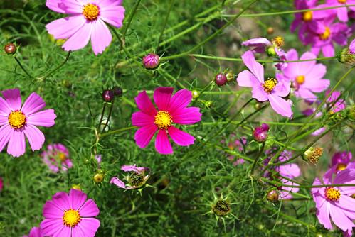 flowers, pentax k10d , düzce