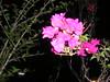 Flowering bushes at night