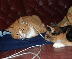 Feel the rhythm  (Johanna(veryOFF)) Tags: catnipaddicts